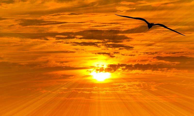Abenstimmung, Vogel, Sonne